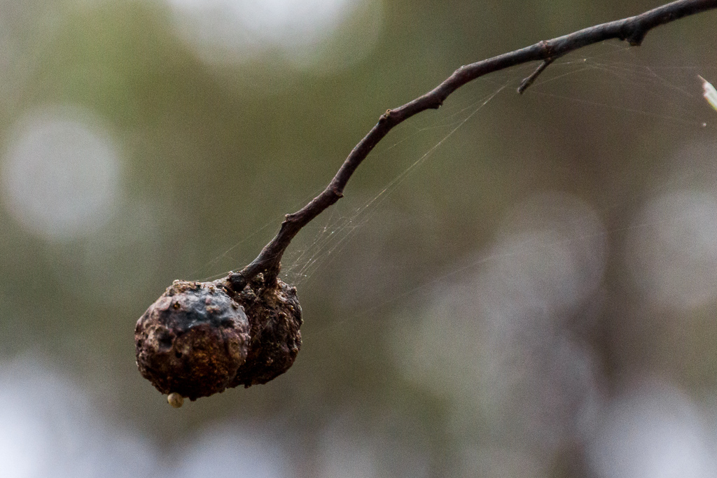 spider-web-on-twig