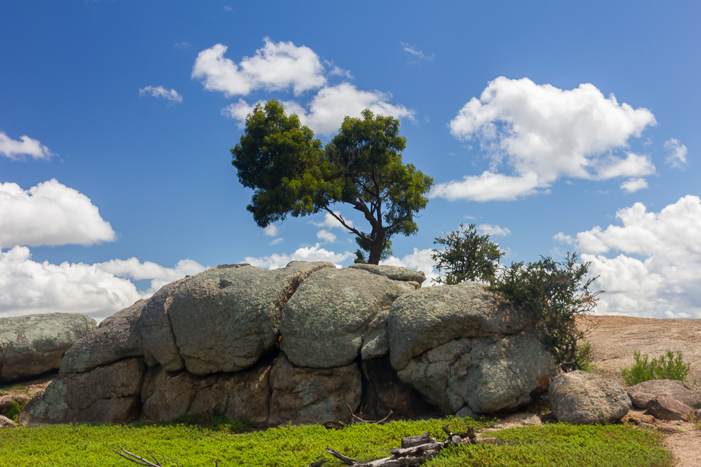 tree-atop-big-rock-you-yangs