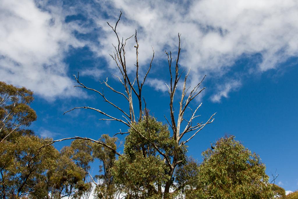 tree-blue-sky-steiglitz