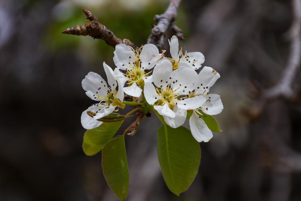 white-flower-castlemaine