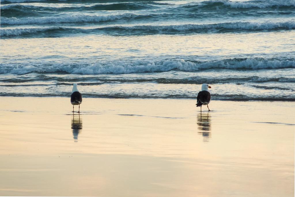 gulls-on-beach-oberon-bay-wilsons-promontory
