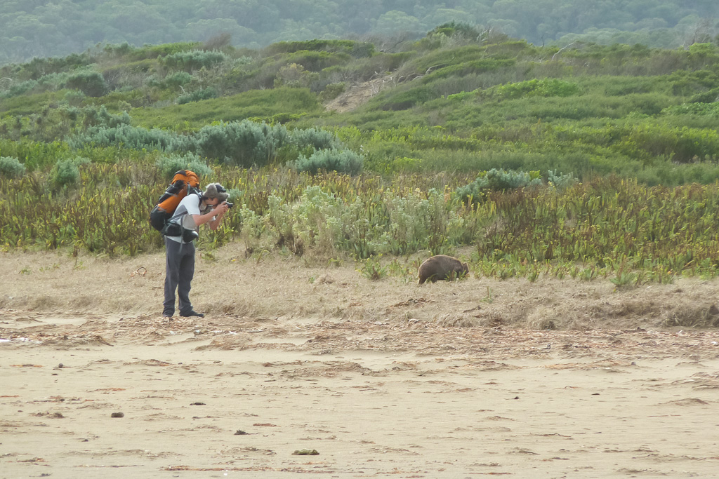 taking-photos-of-wombat-wilsons-promontory