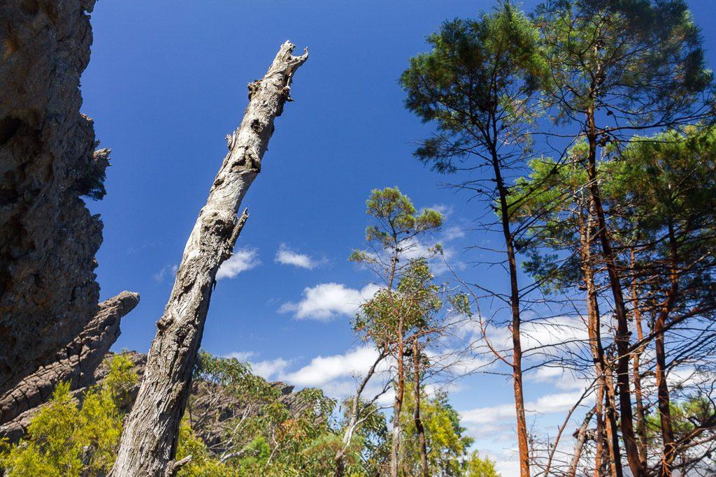 bare-eucalypt-branch-grampians