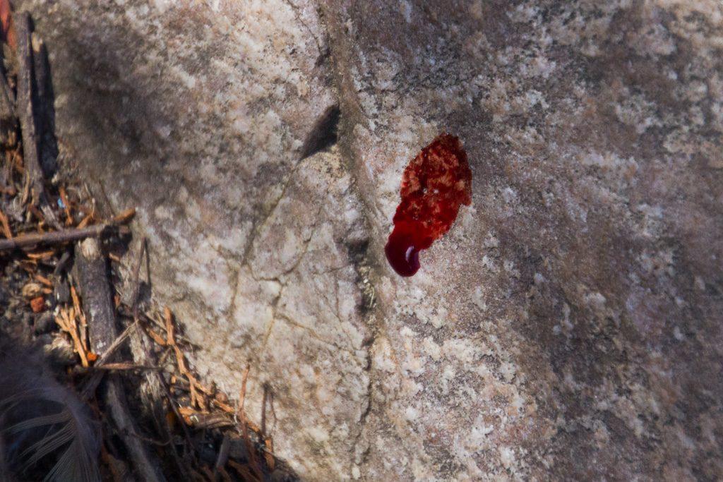 blood-on-rock