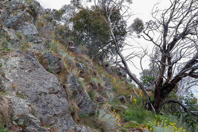 climbing-trees-rocks-west-ridge-mount-buller