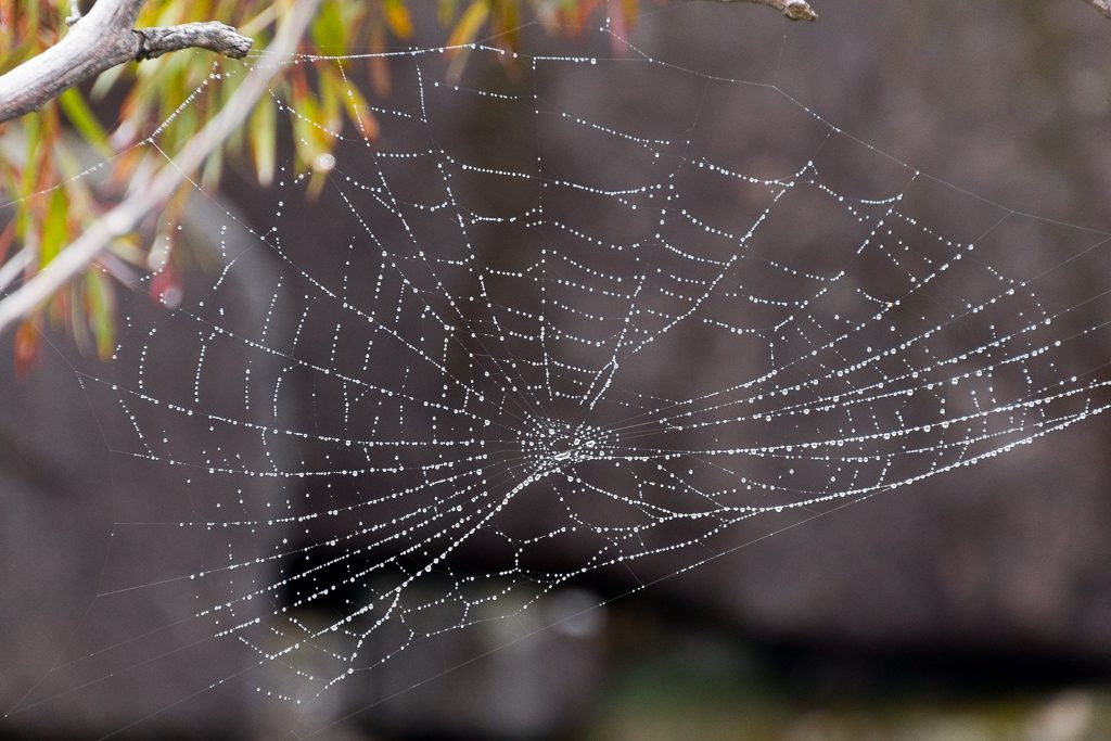 dew-on-spider-web-mount-buffalo