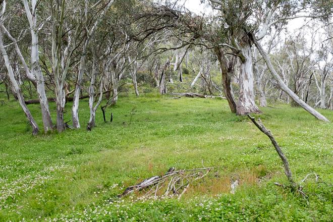 grassy-meadow-flowers-ridge-buller