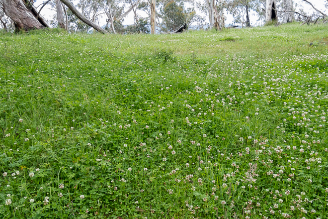 grassy-meadow-with-flowers