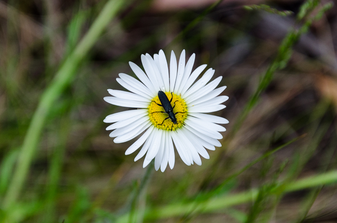 insect-on-white-flower