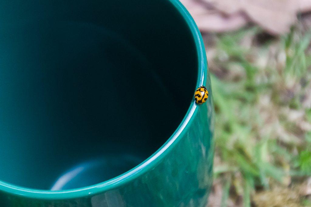 lady-bug-walking-on-rim-cup