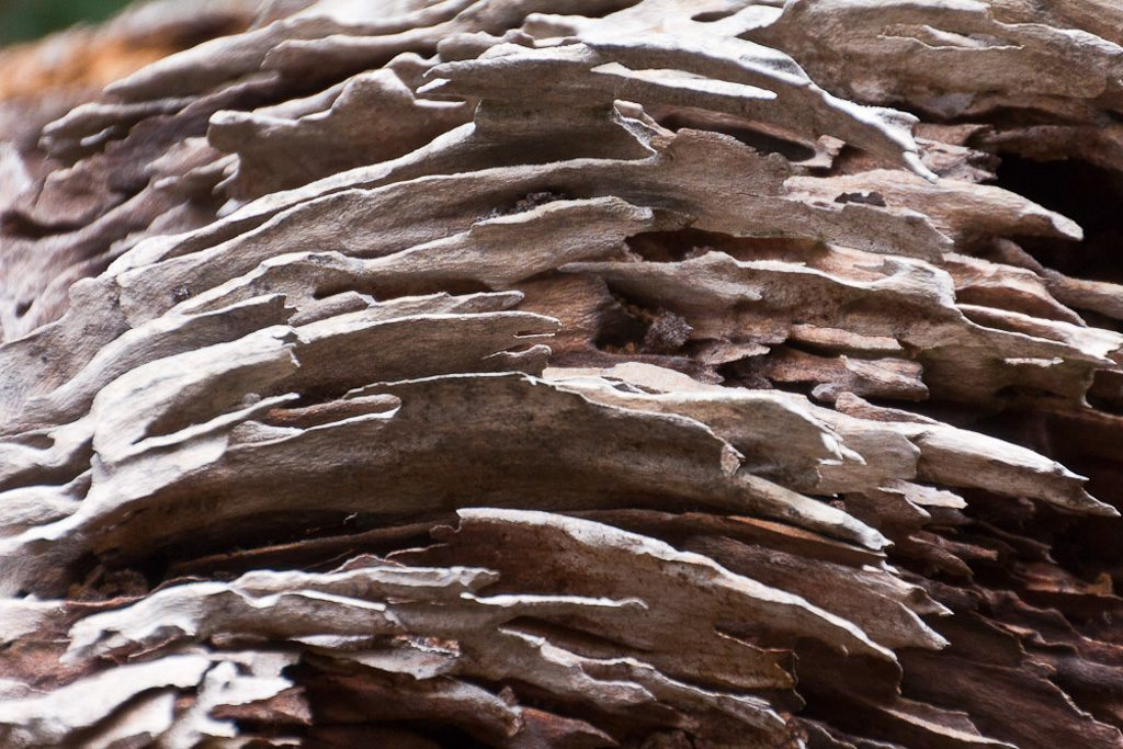 old-weathered-timber