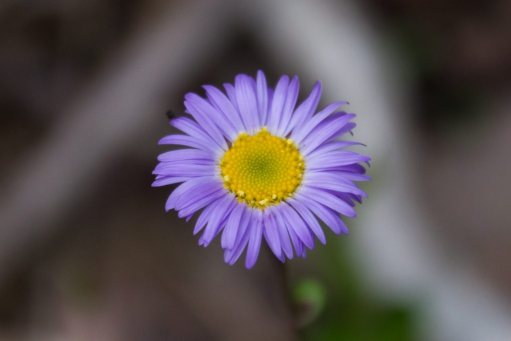 purple-yellow-flower
