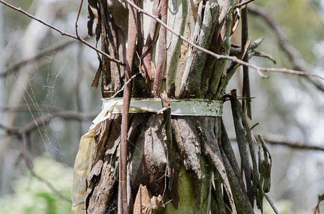 tape-around-tree