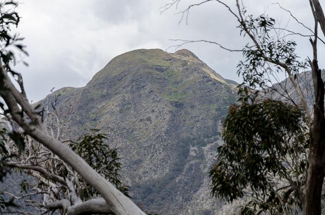 through-the-trees-mount-buller