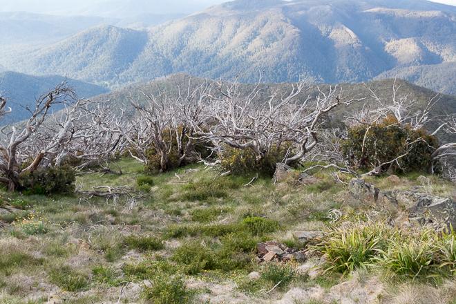 trees-below-mount-buller