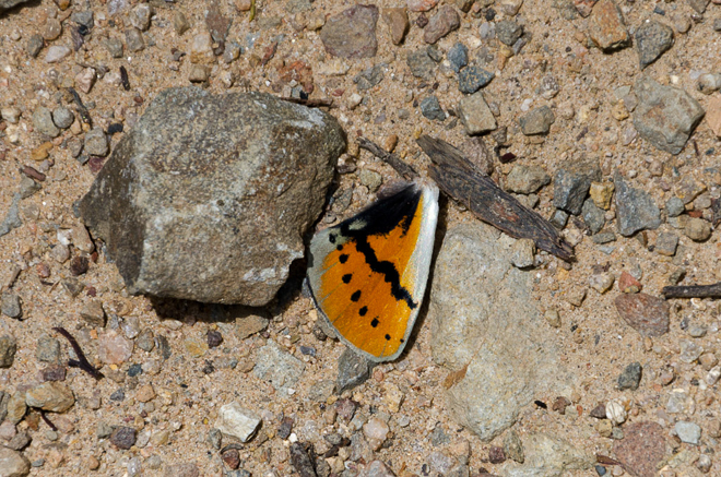 wing of butterfly on road