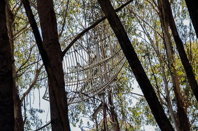 large-antenna-bush