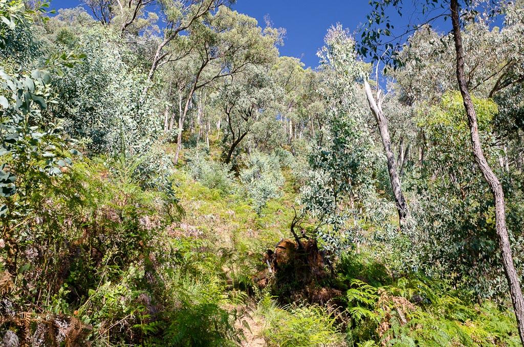 big-walk-track-ferns