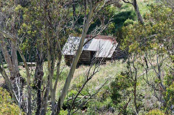 Blair Hut from West Kiewa Logging Road