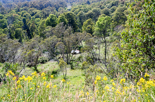 Blair Hut from West Kiewa Logging Road