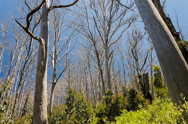 trees-diamantina-spur