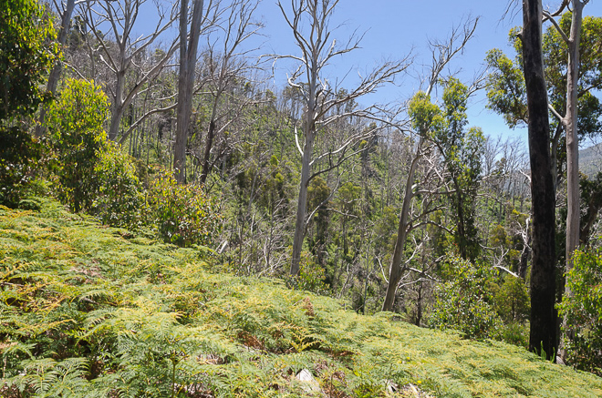 slope-and-trees-diamantina-spur