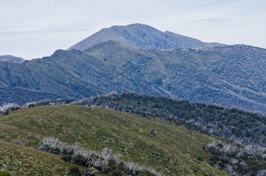 Mt-Feathertop-behind-Diamantina-Spur