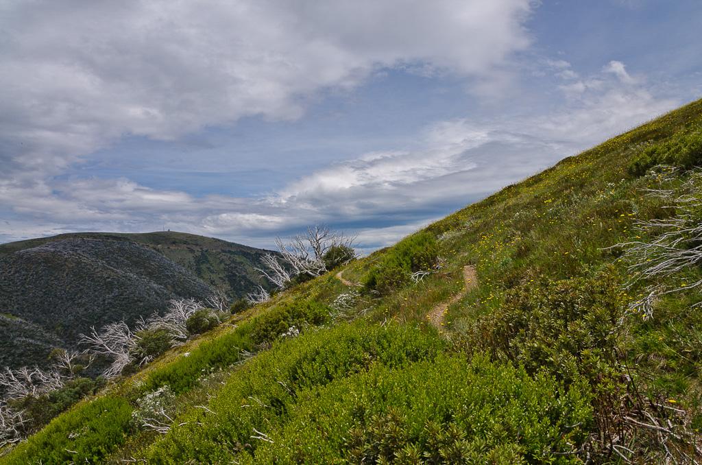 Razorback-Spur-track