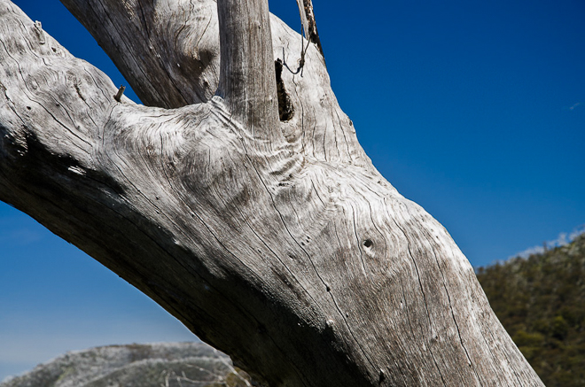 Tree Detail-Diamantina Spur
