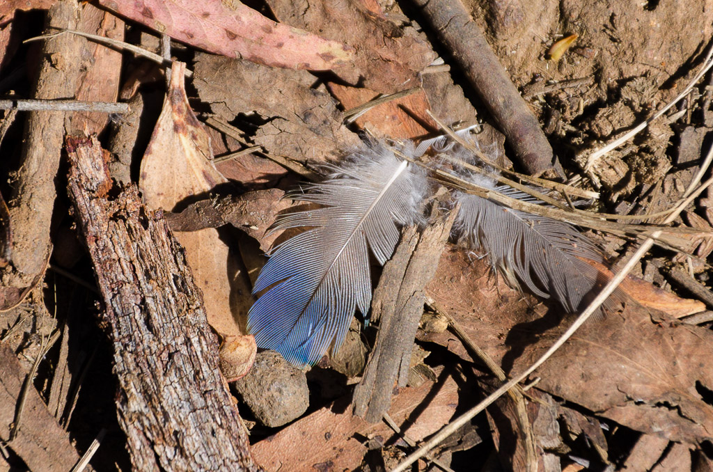 blue-feather-on-ground