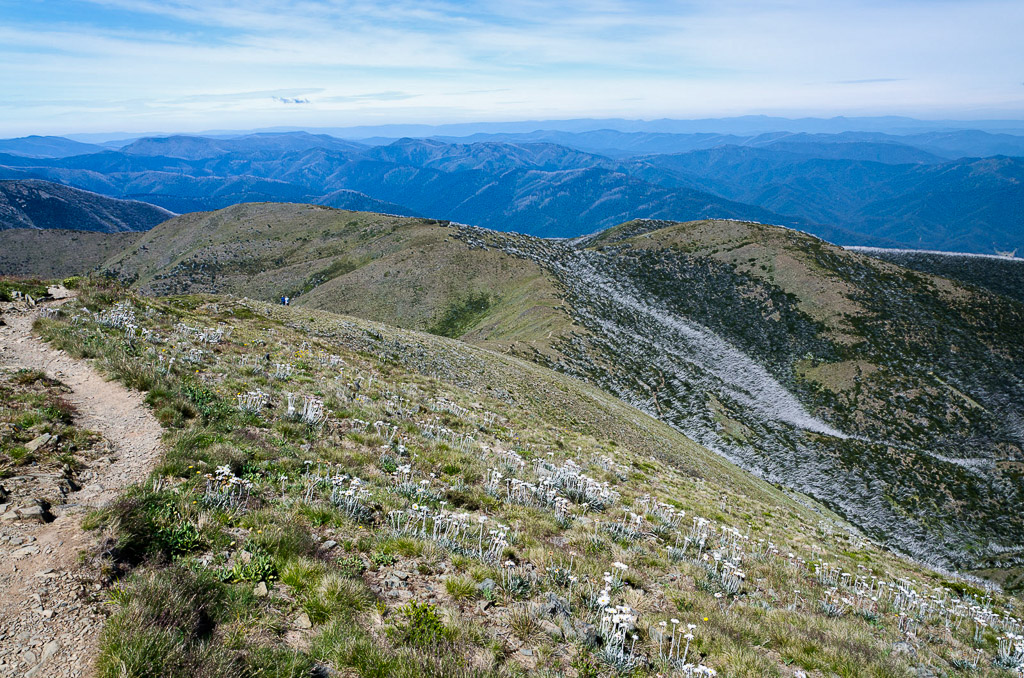 descending-path-from-Mt-Feathertop