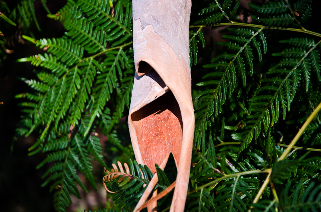 fallen-bark-on-fern-frond