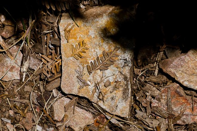 dry-fern-frond-on-rock
