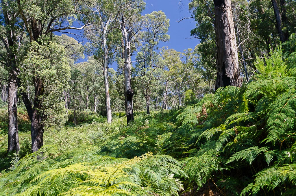 ferns-on-big-walk-track