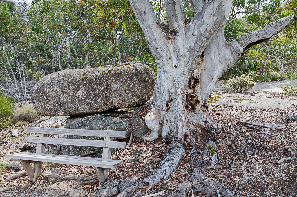 snowgum-and-rock-Big-Walk