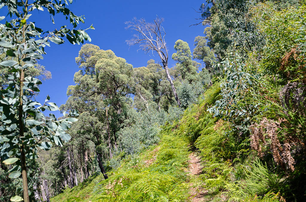 uphill-track-Big-Walk
