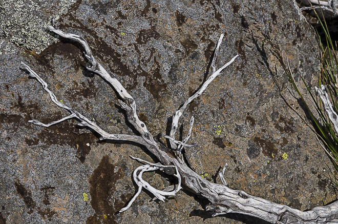 white-branch-against-rock