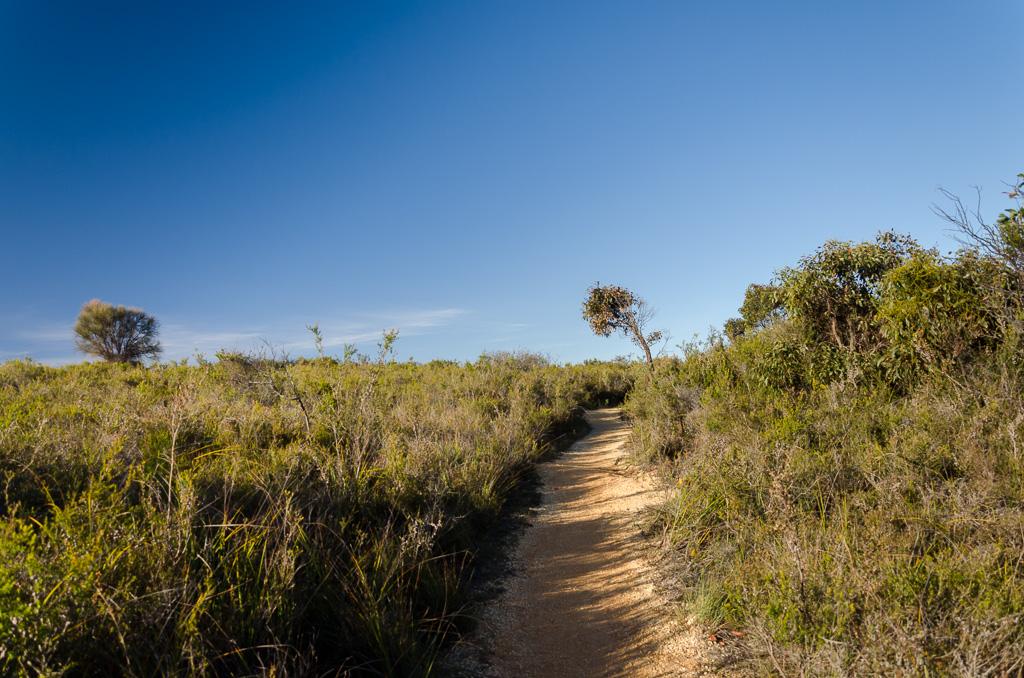jarosite-track-ironbark-walk