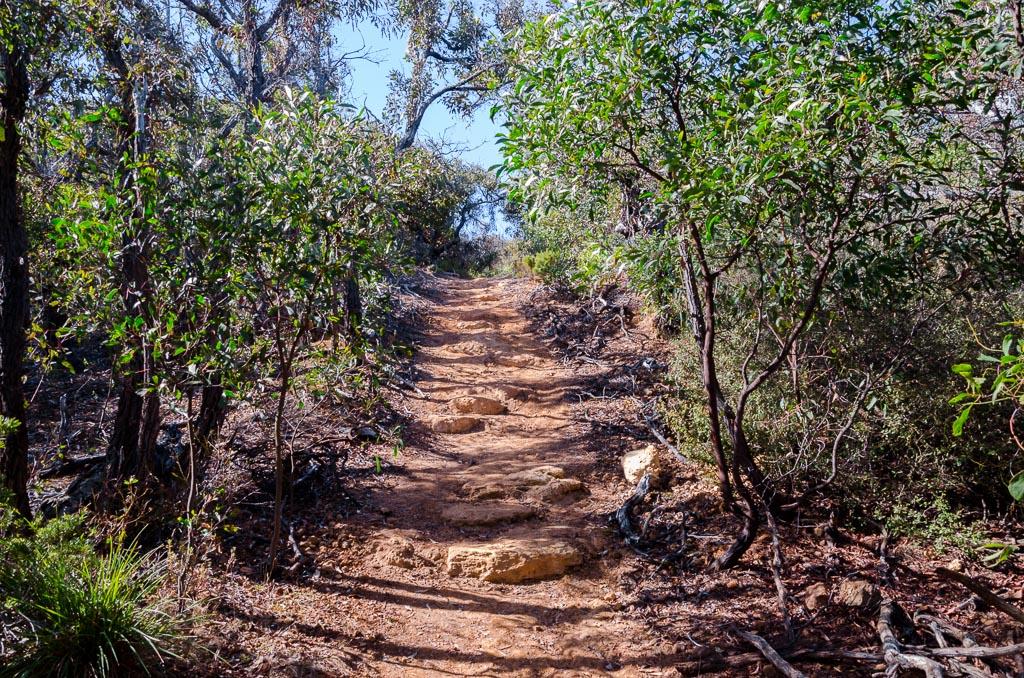koori-cultural-track-walk