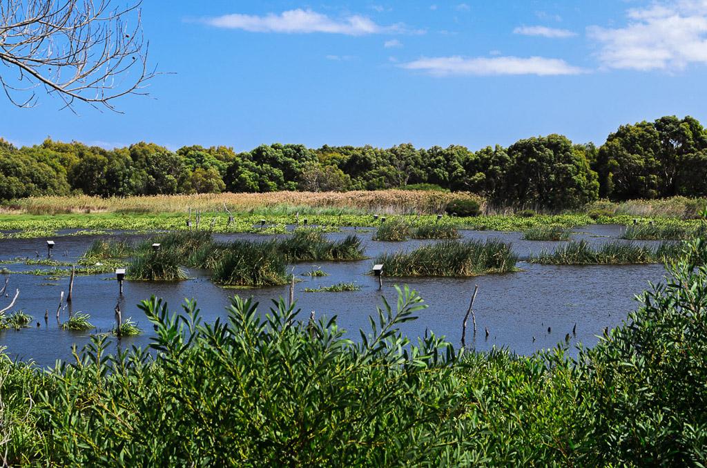 baxters-wetlands