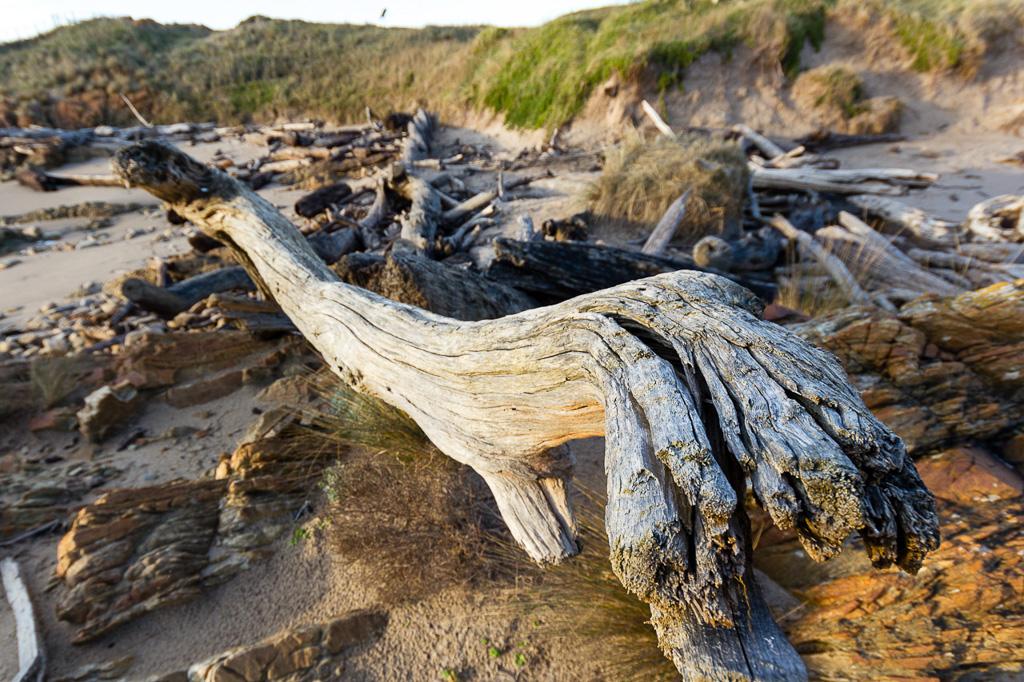 driftwood-gardiner-point