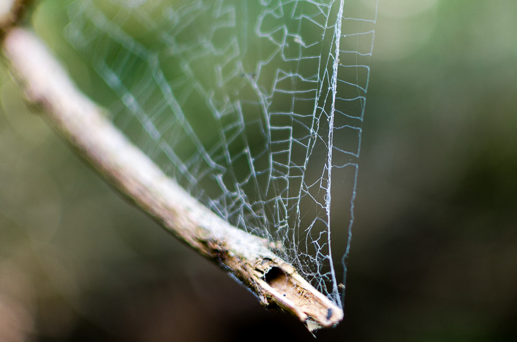 spider-web-on-branch
