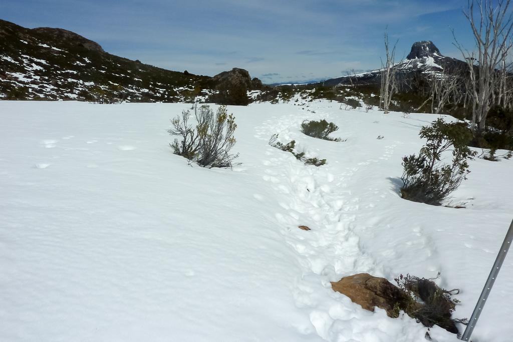 snow-on-overland-track