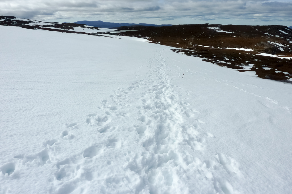 walking-snow-overland-track-cradle-mountain