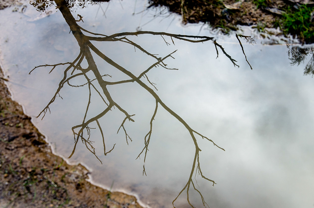 water-reflection-great-south-west-walk