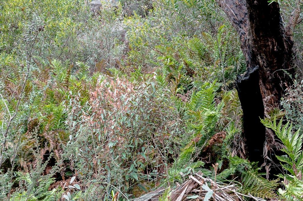 bush-beneath-beehive-falls