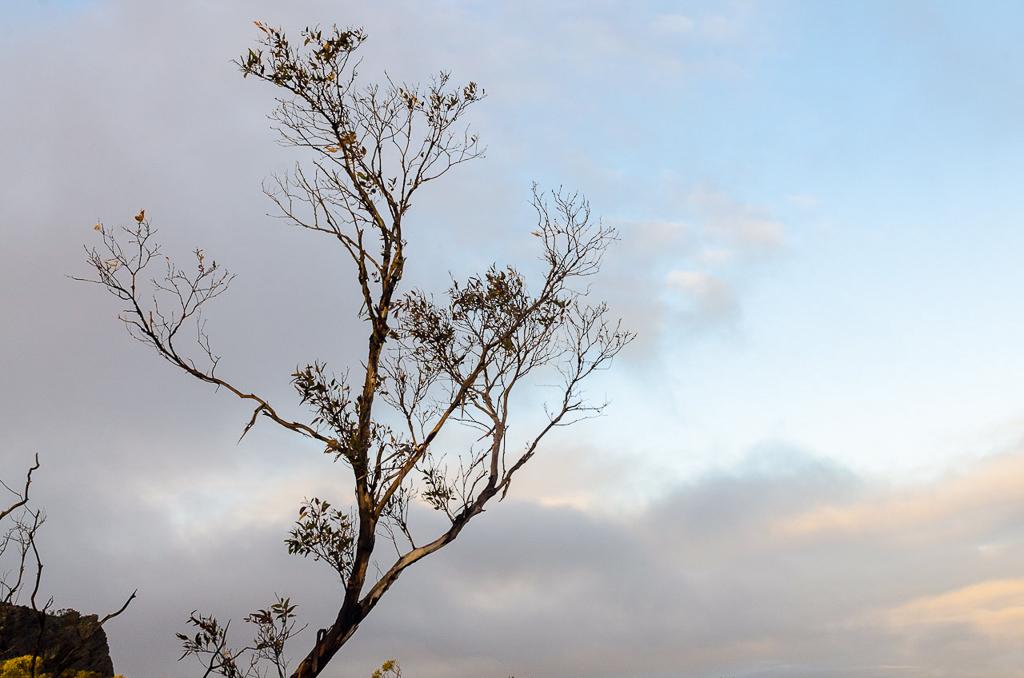 early-morning-sun-on-eucalypt-grampians