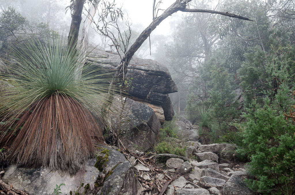 grass-trees-next-to-mount-diffcult-track