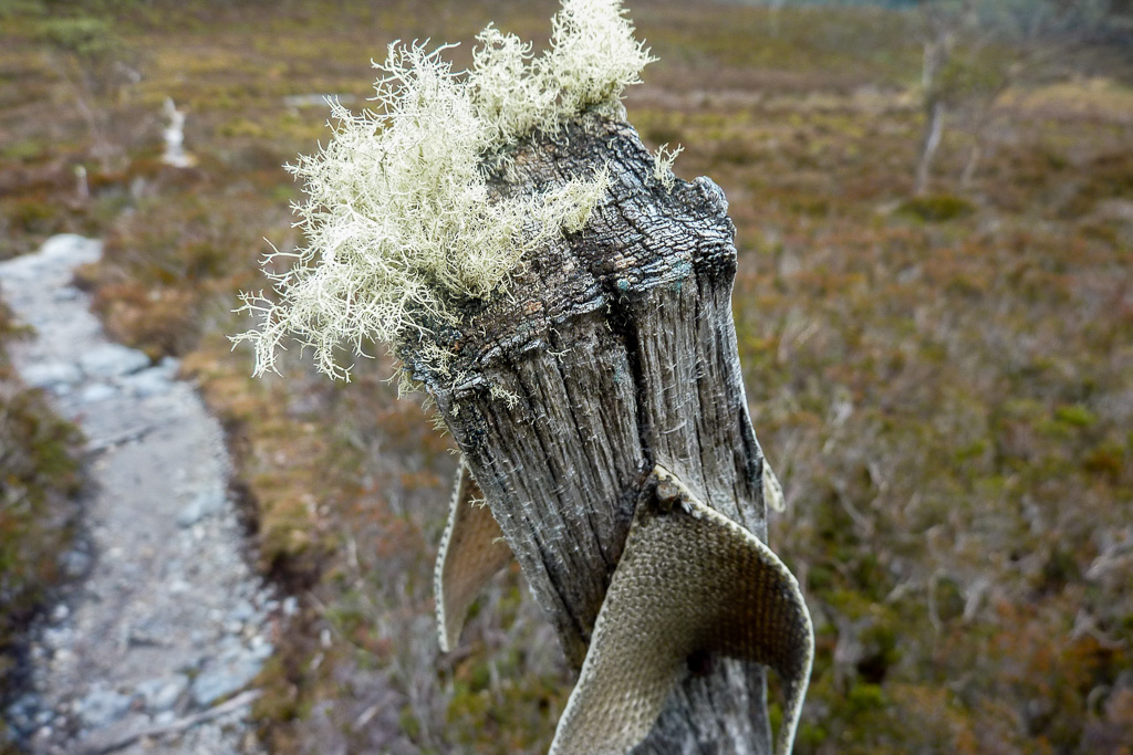 track-marker-moss-overland-track-tasmania