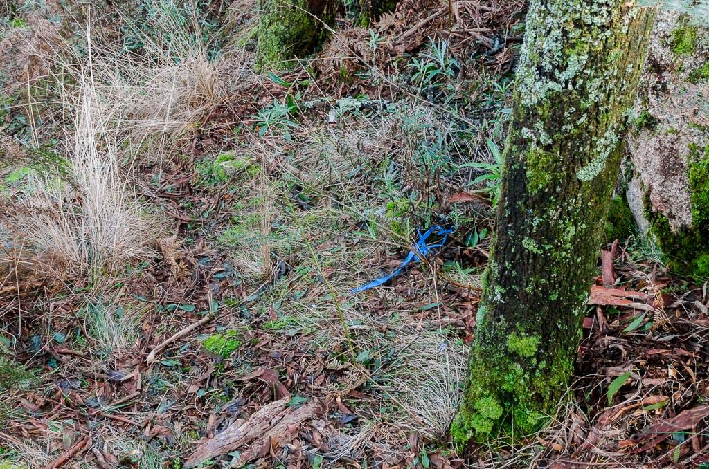 blue-track-marker-tape